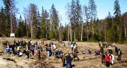 Consiliul Judetean Neamt a informat ca miercuri, 19 martie, reincepe campania de plantari de perdele forestiere.