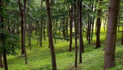 Forestierii vor mai multi bani de la Guvern pentru refacerea padurilor
