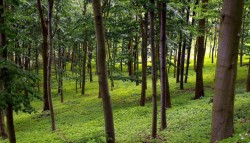 Investitii de 305 milioane euro in sectorul forestier