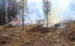 """Doua hectare au fost incendiate pe Situl Natura 2000 """"Fagetul Clujului – Valea Morii"""""""