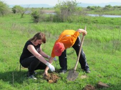 Voluntarii au inceput plantarile de puieti in padurile din Harghita