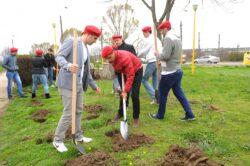 Tinerii social-democrati vor sa planteze un hectar de padure in Brasov