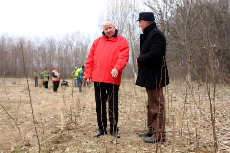 Perdele forestiere pentru ierni fara probleme