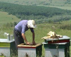 Cure cu polen crud pentru un organism fortifiat