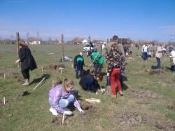 Plantare de puieti la Moftin