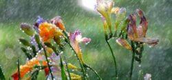 Fascinatia placuta a mirosului de ploaie. De unde vine?