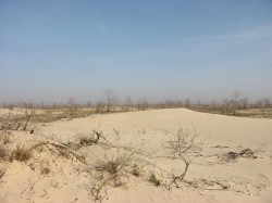 Razboi pentru plajele salbatice din Delta Dunarii