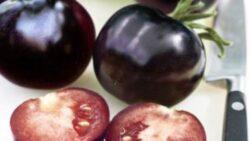 Rosia neagra, un nou soi de tomata creat in laborator. De ce este considerat un superaliment
