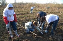 Culita Tarata mai aduce 500.000 puieti de salcami de la Constanta