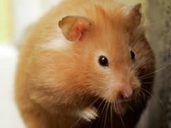 Camera Deputatilor a adoptat un proiect de lege privind protectia animalelor utilizate in scopuri stiintifice