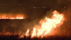 Trei hectare de stufaris din rezervatia protejata de la Sic au fost distruse ieri de flacari