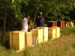Canada: stupi pentru albine din deseuri de plastic