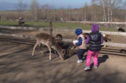 Ora de zoologie in natura. Copiii pot hrani cerbi, lame si maimute la 15 km de Cluj-Napoca