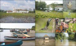 Parcul Natural Lunca Mureşului, paradisul de lângă noi