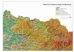 Viziunea WWF pentru conservarea ursului brun: habitate intinse si neintrerupte