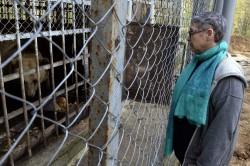 Vier Pfoten face presiuni pentru salvarea a doi ursi tinuti ilegal intr-o gradina zoologica din Bulgaria