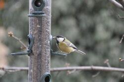 Cluj va fi cel mai prietenos oraș din România pentru păsările sălbatice