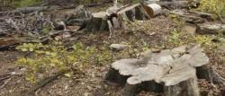 Nadas: Cantitati mari de lemn ar fi fost valorificate ilegal din padure