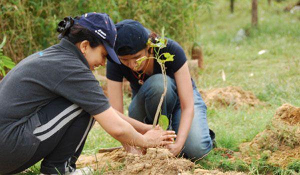 """Peste 1,7 milioane de puieti vor fi plantati in padurile din Maramures in cadrul actiunii """"Luna plantarii arborilor"""""""