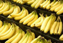 Culturile de banane din Asia, America Latina si Africa sunt compromise din cauza unui virus nou aparut
