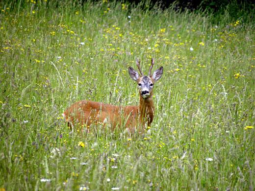 O campanie de informare privind protejarea biodiversităţii se va desfăşura în Moldova