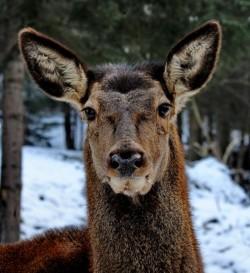 APM Bihor: Actiuni de evaluare a speciilor de animale salbatice strict protejate