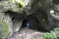 Specii unice in pestera Ciur-Izbuc din judetul Bihor