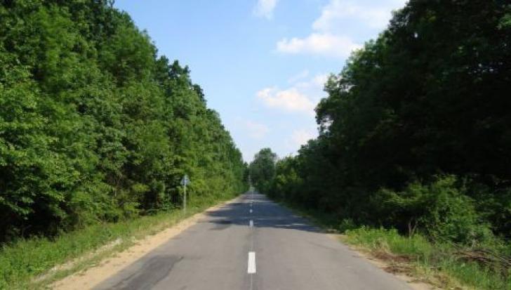 Perdele forestiere de protec?ie de-a lungul A2. Romsilva va începe în aceast? toamn? s? le planteze