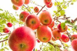 10 reguli. Cum plantezi un pom fructifer ca la carte