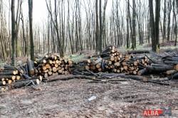 """Taieri masive de copaci in padurea Mamut. Ocolul Silvic Alba Iulia: """"Se face tratament de raritura"""""""