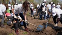 Peste 8.000 de puieti de stejar au fost plantati in Parcul Natural Comana de voluntari ai Asociatiei MaiMultVerde
