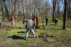 Tinerii de la PSD Iasi au plantat 100 de tei in zona Copou