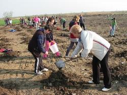 Peste 18.000 de puieti vor fi plantati la Capleni, Satu Mare