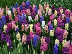 Ce secrete ascund florile de primavara. Efectele lor miraculoase pentru sanatate