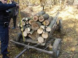 Politistii pun tunurile pe hotii de lemne