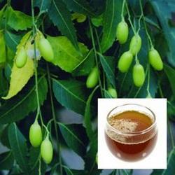 Uleiul de Neem un insecticid ecologic eficient