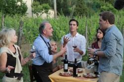Italia: 57 mii hectare de plantatii viticole ecologice