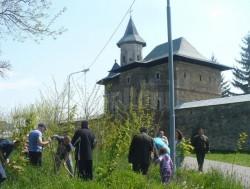 150 de puieti de arbori, plantati in zona Manastirii Zamca