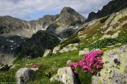 Ziua Europeana a Parcurilor, 24 mai