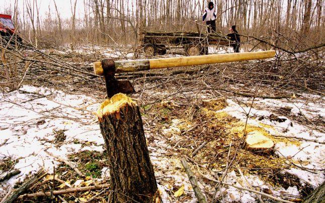 Paradoxuri statistice: în România se taie p?duri de patru ori mai mult decât se regenereaz?, dar fondul forestier cre?te