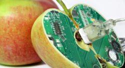 Plante modificate genetic pentru continut sporit de nutrienti ar putea fi cultivate in cateva luni in Marea Britanie