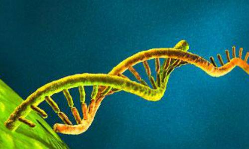 """""""Ghinionul biologic"""", vinovat de două treimi din cazurile de cancer – studiu american"""