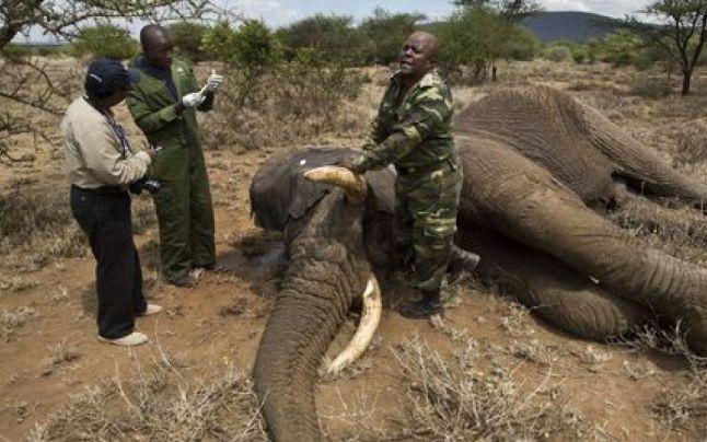 Num?rul elefan?ilor din Tanzania a sc?zut drastic. Speciali?tii vorbesc de timpul r?mas pân? când vom asista la dispari?ia acestor animale