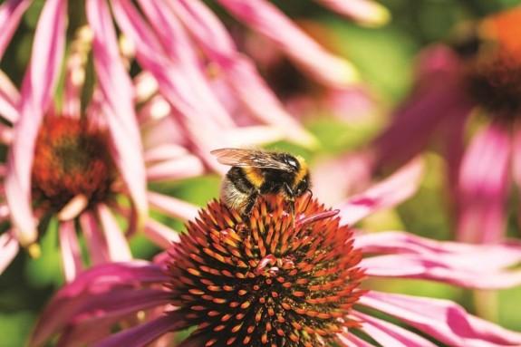 """""""PLAN BEE – A tr?i f?r? pesticide"""""""