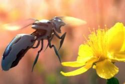 Albinele dispar, cercetatorii pregatesc insecte-roboti