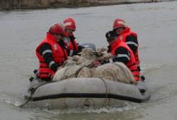 Vier Pfoten Romania a trimis specialisti si medici veterinari in Serbia, in ajutorul animalelor din fermele distruse de inundatii ori abandonate