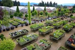 Cati puieti produce Romsilva pentru regenerarea padurilor