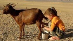 De ce e mai bun laptele de capra pentru micutul tau