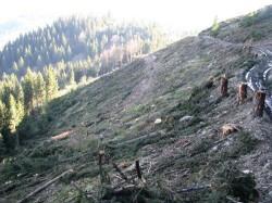 Locul din Romania in care au taiat integral padurile