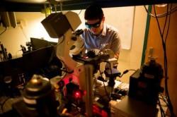 Nanotehnologia ar putea transforma arbustii in generatoare masive de energie